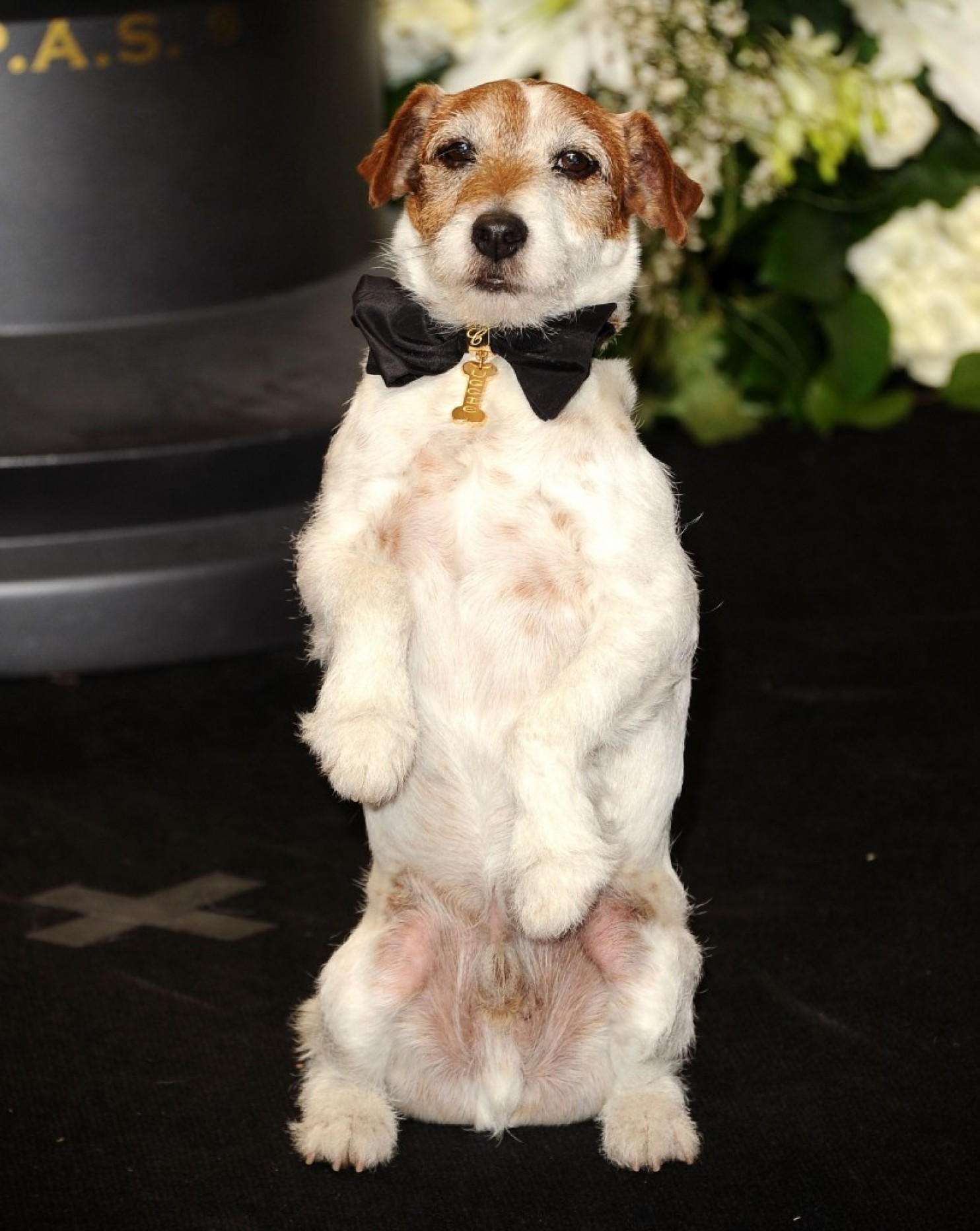 https://www.washingtonpost.com/news/morning-mix/wp/2015/08/12/uggie-dog-star-of-the-artist-is-dead-at-13/