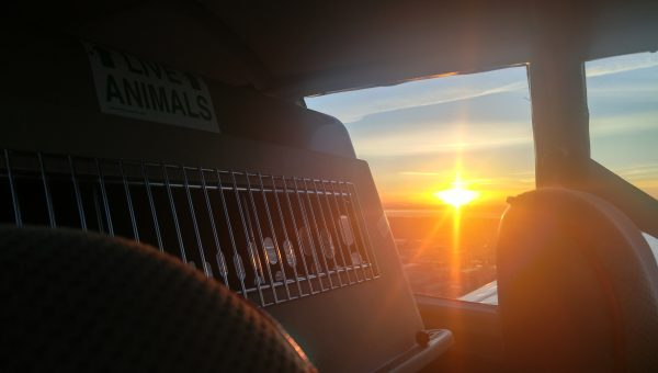 How This Extraordinary Pilot Saved a Dog's Life With One Flight