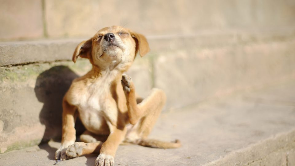 6 Signs Your Dog Is Having An Allergic Reaction The Dog People By