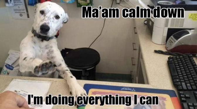 calm down dog meme