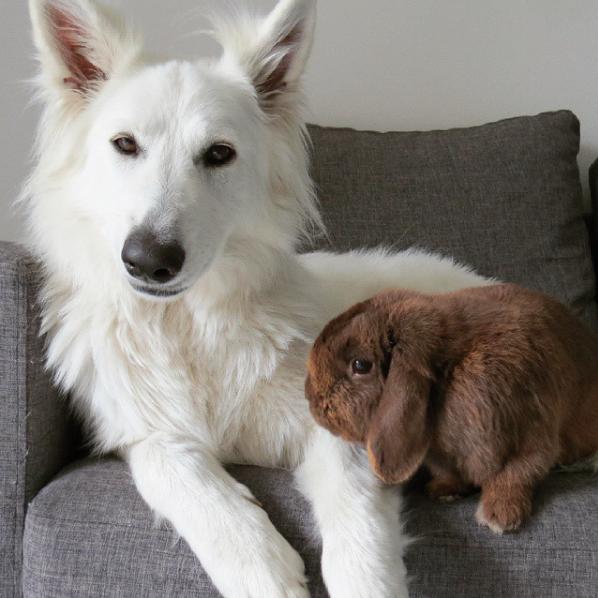 https://www.instagram.com/p/2YVVhMQmR4/?tagged=dogandbunny