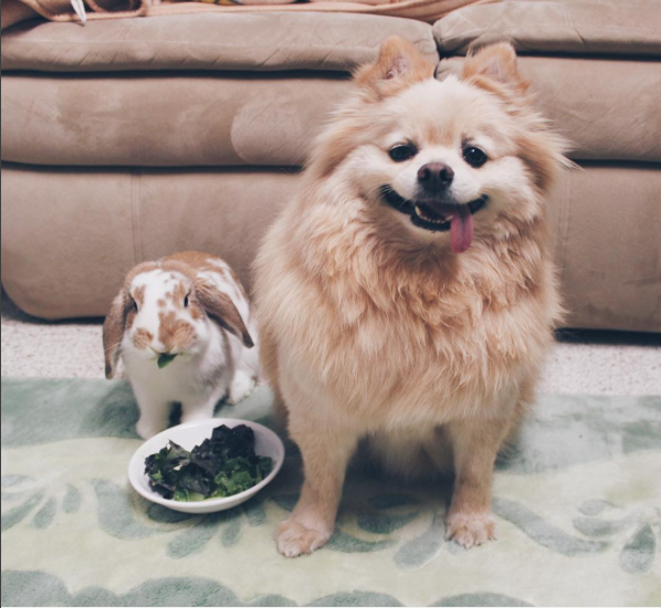 https://www.instagram.com/p/-ruDIDIJoY/?tagged=dogandbunny