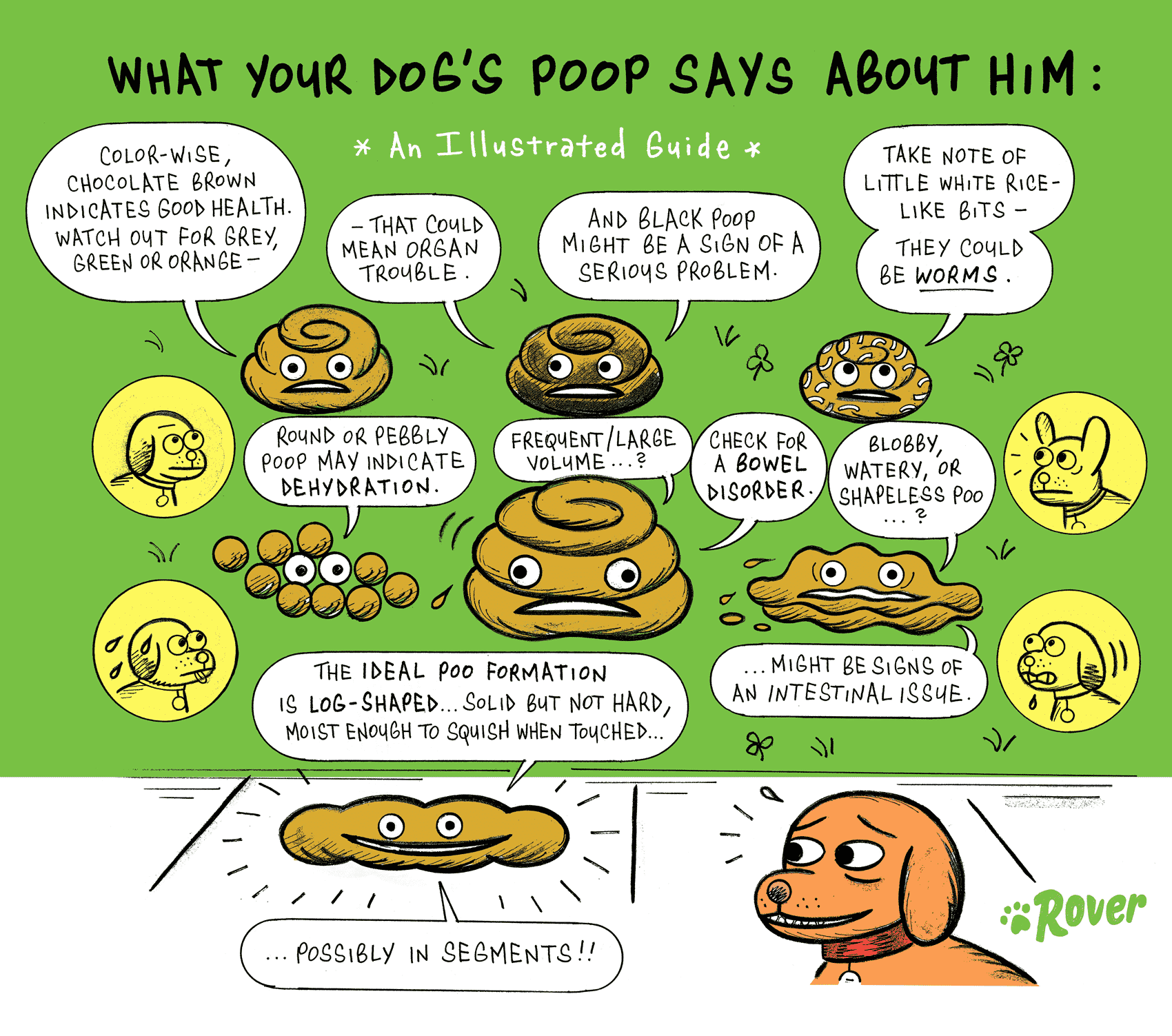 illustrated guide to dog poop