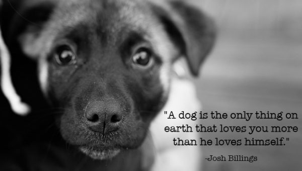 11 Inspirational Quotes about Dogs That Will Make Your Day