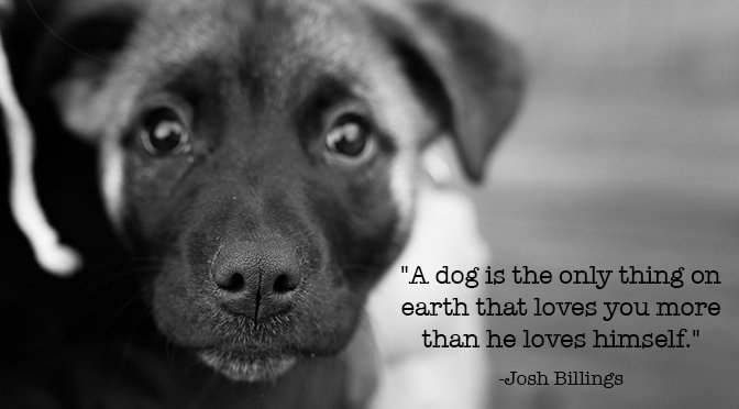 60 Inspirational Quotes About Dogs That All Dog Lovers Need To Know Magnificent Quotes About Dogs Love