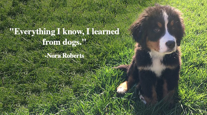 We Know That Our Dogs Make Us Happier And Healthier, But Sometimes Itu0027s  Hard To Put It Into Words. Thatu0027s Where These Gorgeous Sayings Come In.