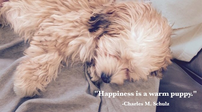 10 Inspirational Quotes About Dogs That All Dog Lovers