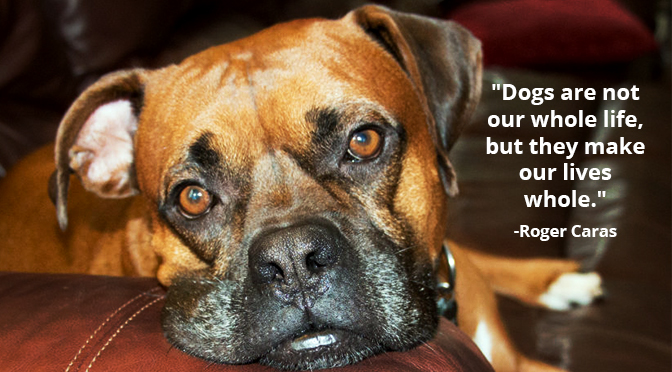 10 Inspirational Quotes about Dogs that All Dog Lovers Need