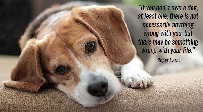 Quotes About Pets: 10 Inspirational Quotes About Dogs That All Dog Lovers