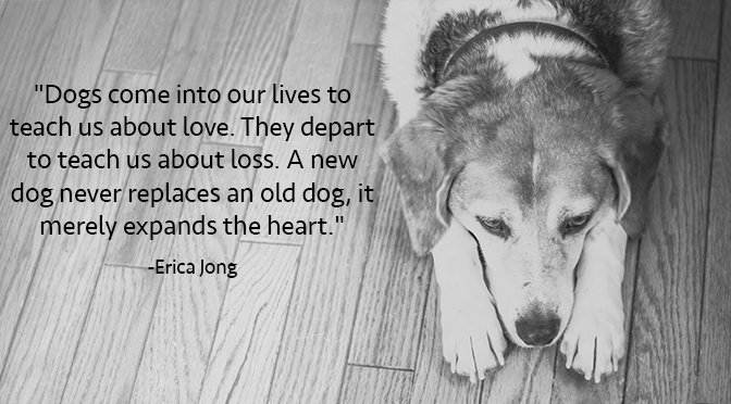 10 Inspirational Quotes About Dogs That All Dog Lovers Need To Know