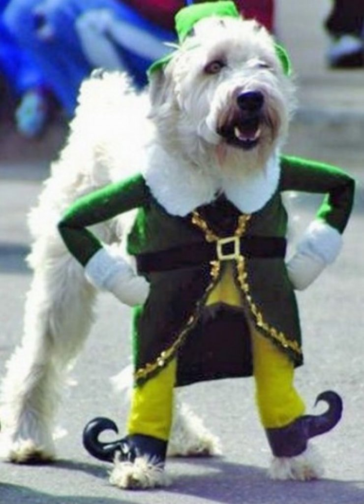 dress the part terrier dog leprechaun