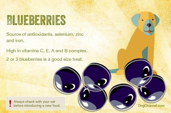 fruit-blueberries
