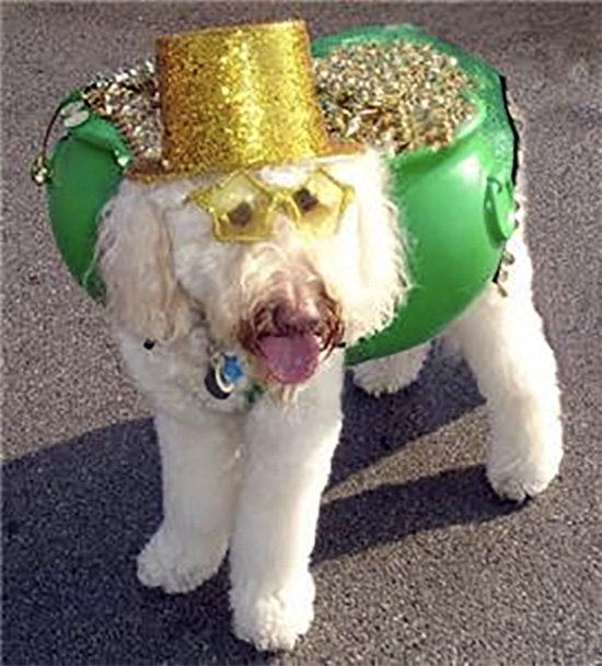 labradoodle pot of gold