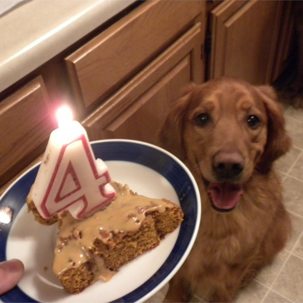 5 Dog Birthday Cakes Your Dog