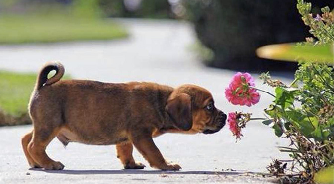 these pictures of dogs with flowers will make you smile