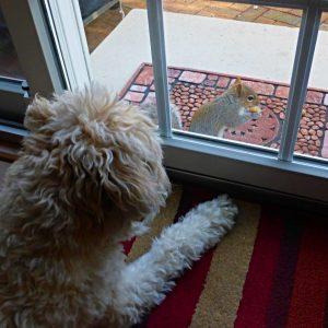runaway-squirrel