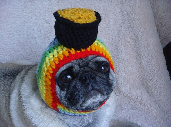 sweet hoots etsy dog rainbow pot of gold hat pug