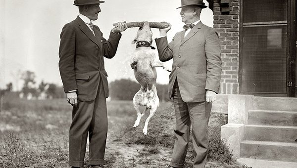 16 Vintage Photos of Insanely Talented Dogs That Will Fascinate You