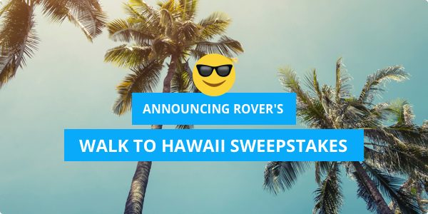 Walk to Hawaii? Announcing Rover's Dog Walking Sweepstakes!