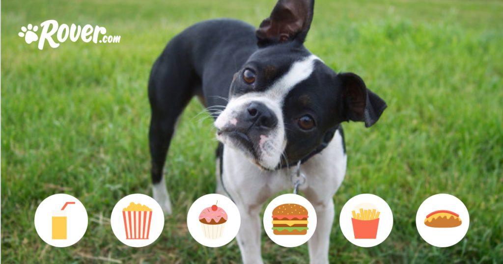 9 Surprisingly Dangerous Foods for Dogs
