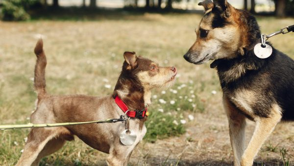 How to Train a Leash Reactive Dog