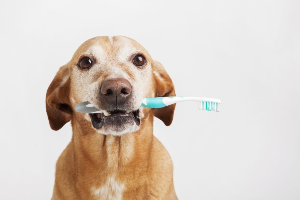 10 Reasons To Take Care Of Your Dog S Teeth The Dog People By
