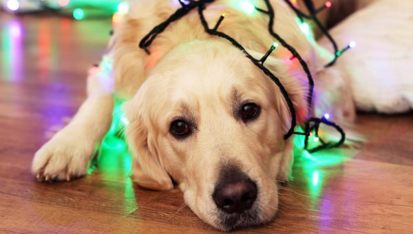 How to Prepare Your Pets for Holiday Guests