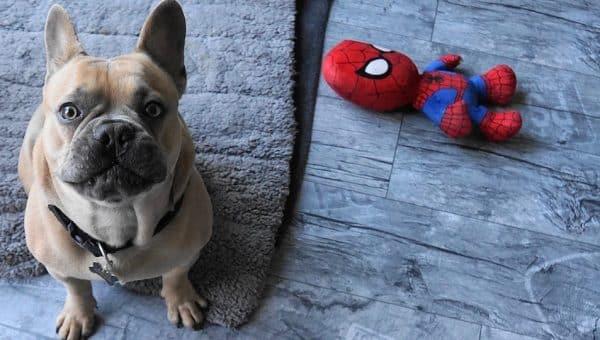 5 Jouets pour chiens faits maison à fabriquer absolument