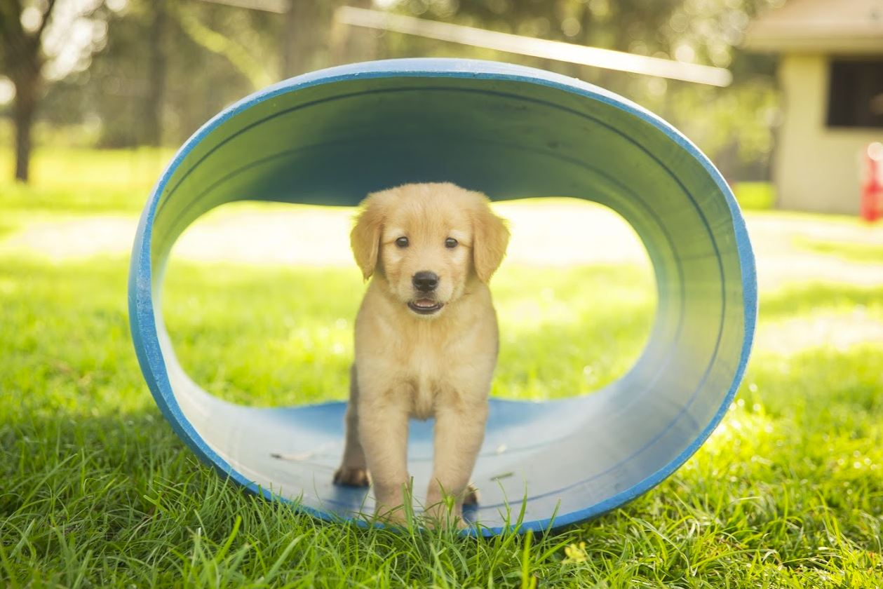 how to foster a therapy dog the dog people by rover com rh rover com Guide Dog with Marine Southeastern Guide Dogs Logo