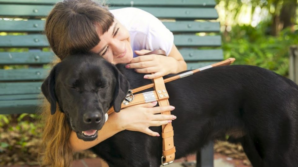How to Foster a Therapy Dog | The Dog People by Rover com