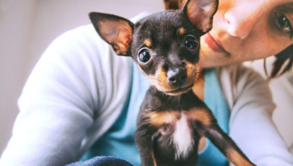 4 Ways to Save Money with Your Dog This Year