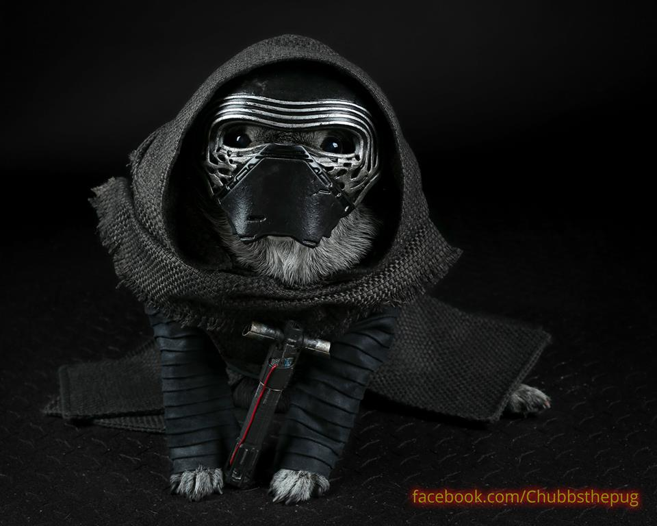 chubbs the wampug kylo ren