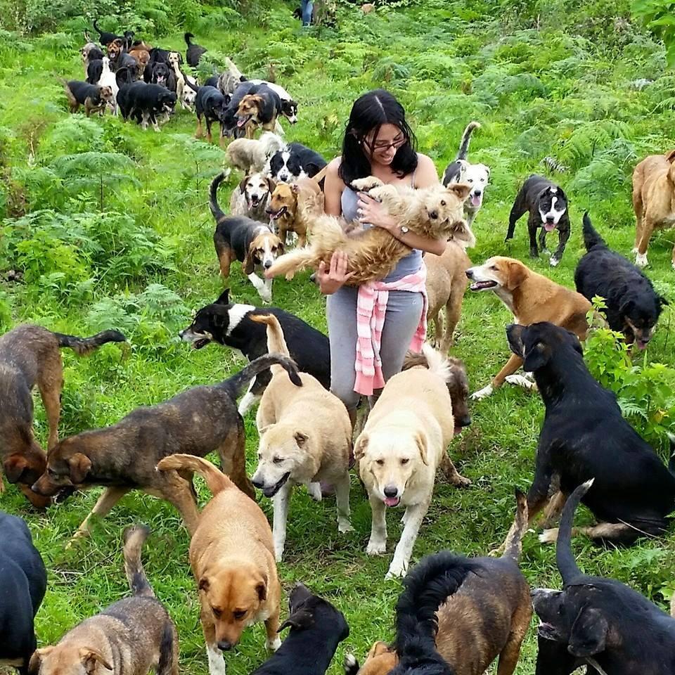 costa rica dogs 2