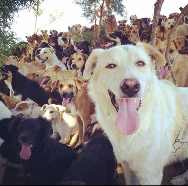 costa rica dogs 4