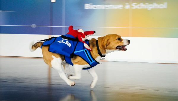 5 Dogs With Cool Jobs We Wish We Had