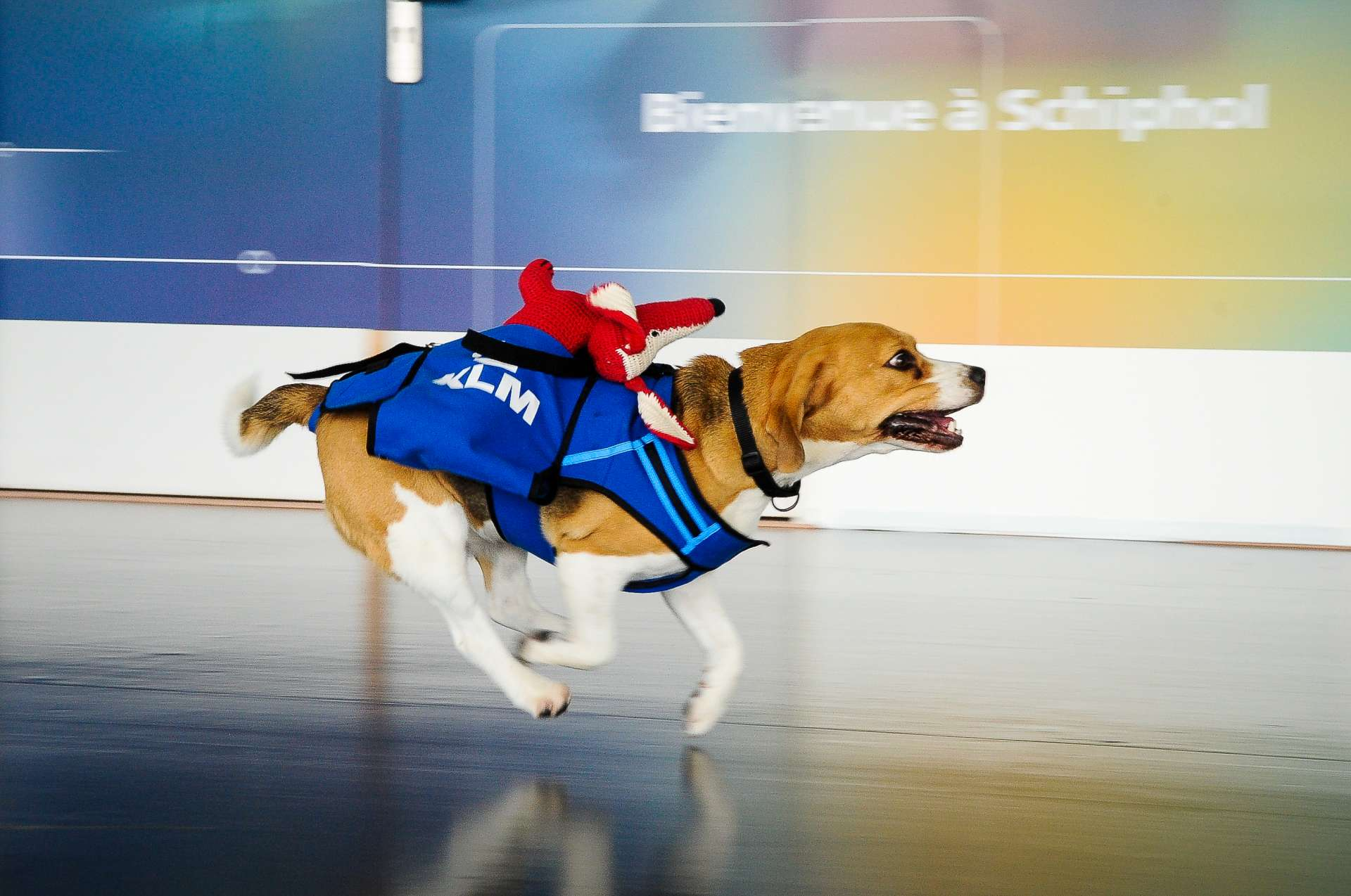 5 Dogs With Cool Jobs We Wish We Had The Dog People By