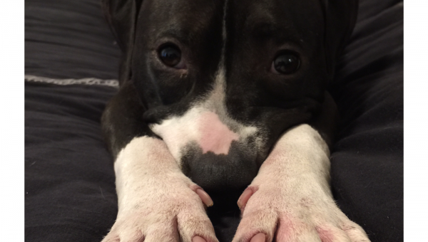 """True Story: I Adopted a """"Bad"""" Dog, and I'd Do it Again in a Heartbeat"""