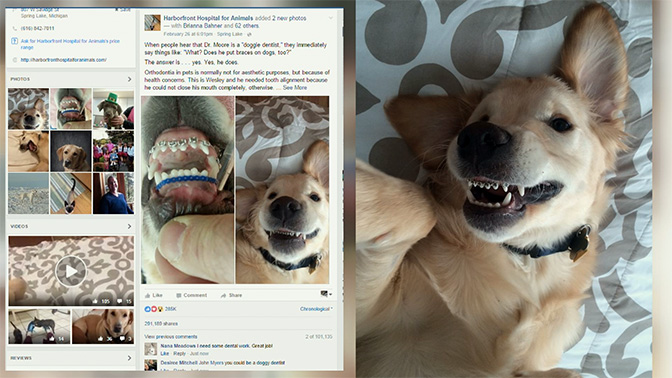 Would You Get These Dogs Braces The Dog People By Rover Com