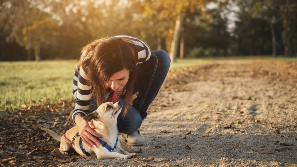 The Best Female Dog Names for 2019 from Tough to Sweet to Unique
