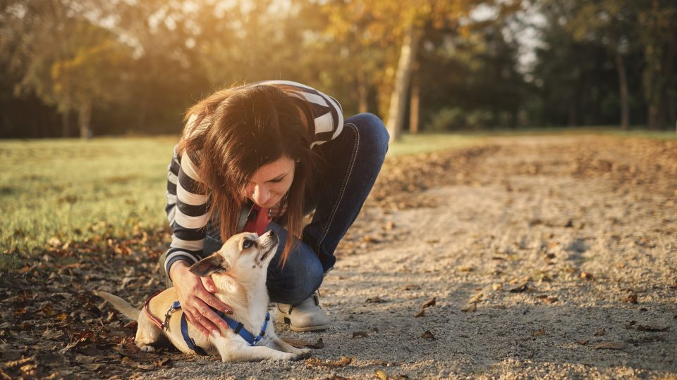 The Best Female Dog Names for 2019 from Tough to Sweet to