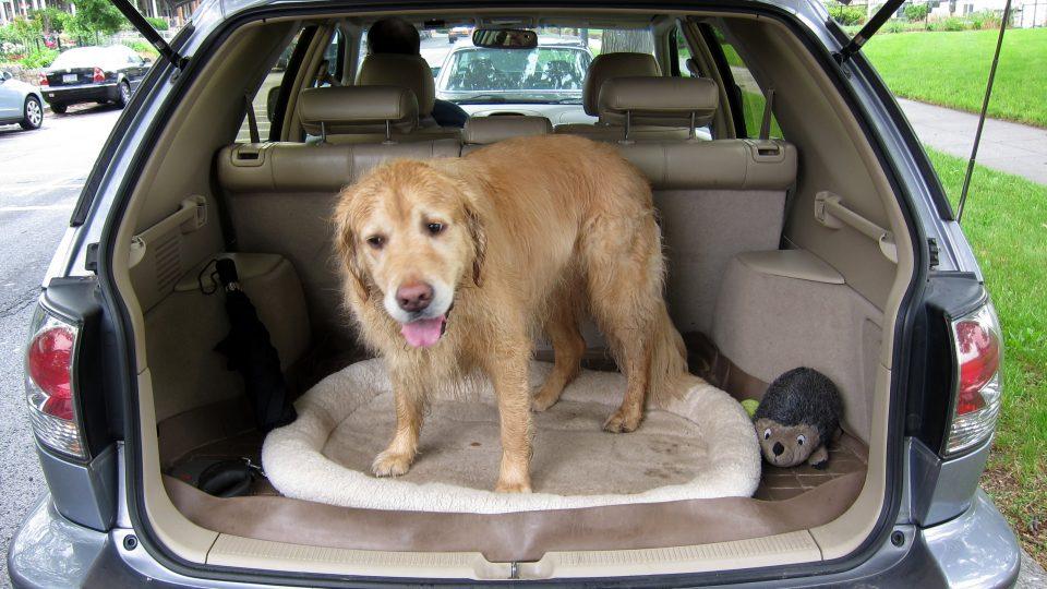 safest dog crate for car