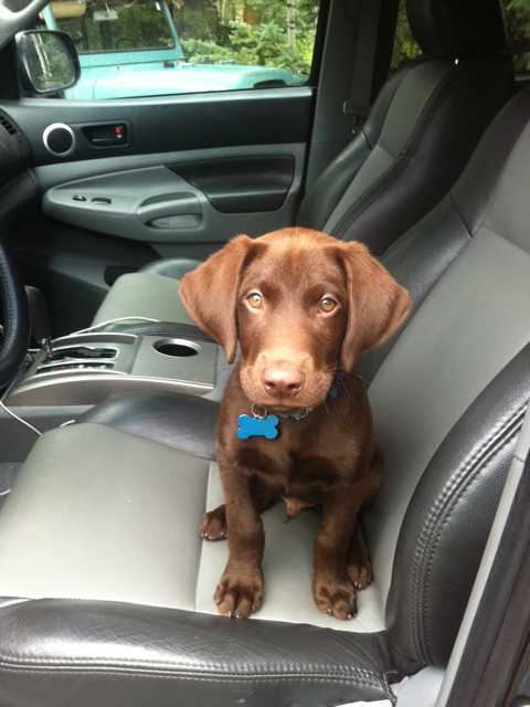 puppy sitting in car