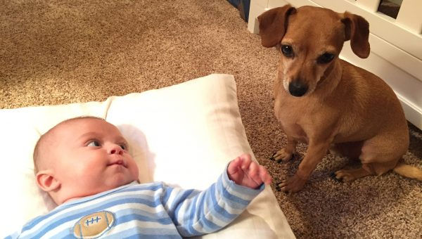 True Story: How I Convinced my Dog to Love my Baby