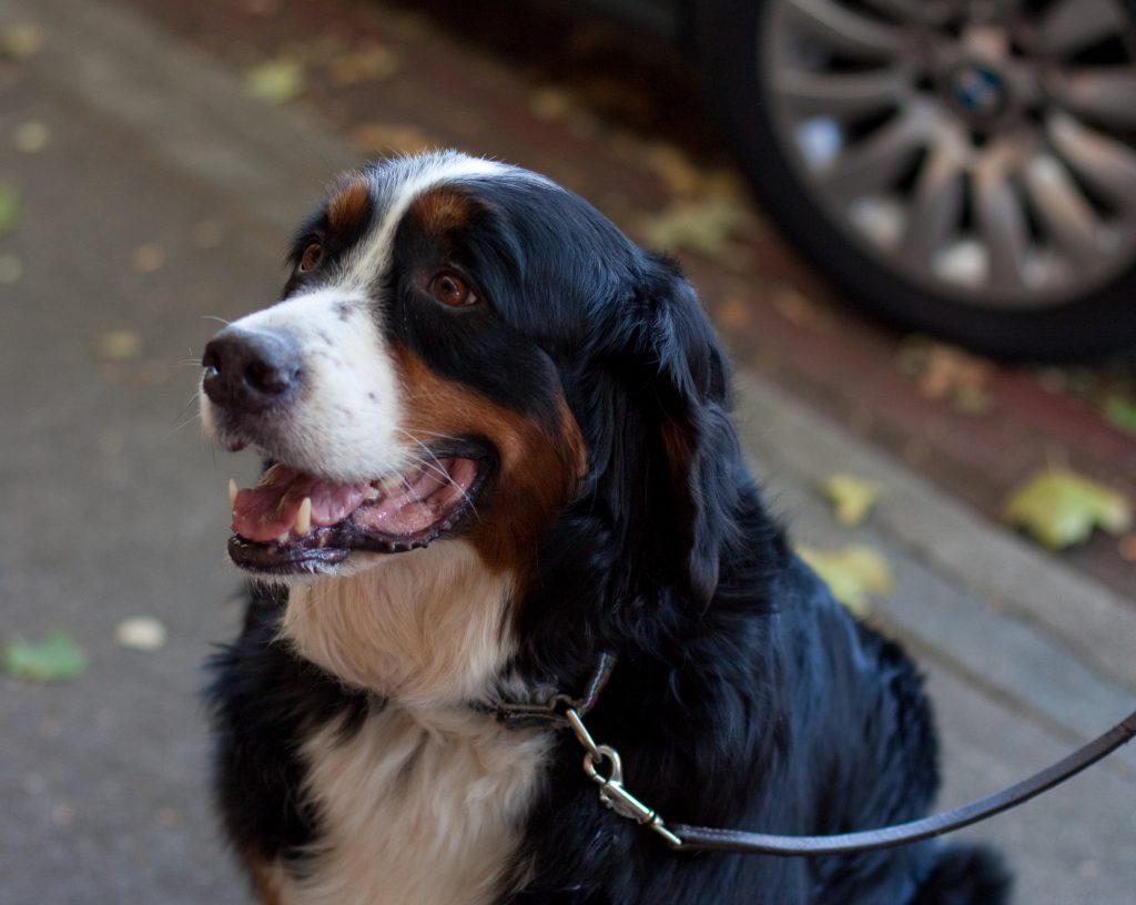 Rover Dog Walking Reviews