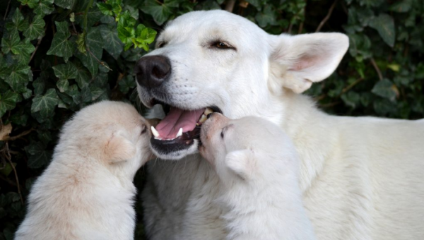 These Dog Moms Cuddling Their Puppies Will Give You All the Mother's Day Feels