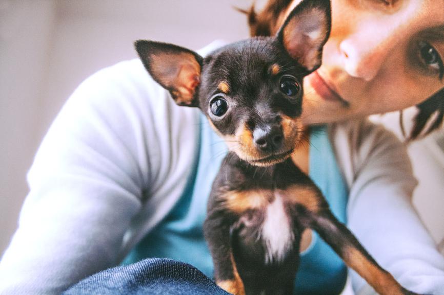 Prague Ratter puppie