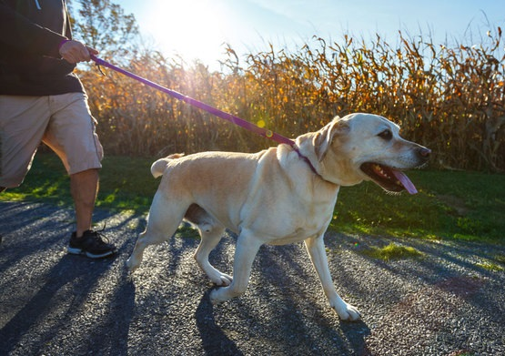 Outrageous Dog Walking Accessories To Take Your Walk To