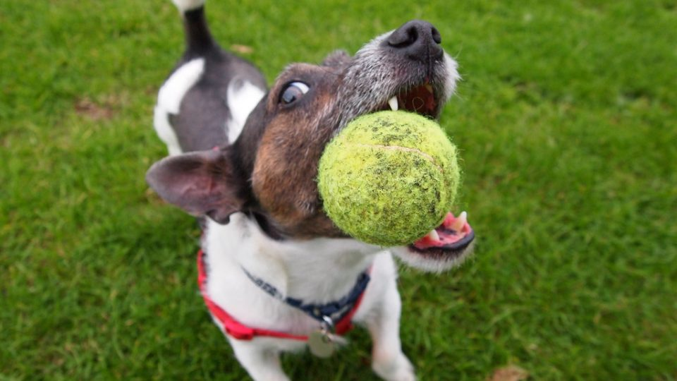 ball jrt header