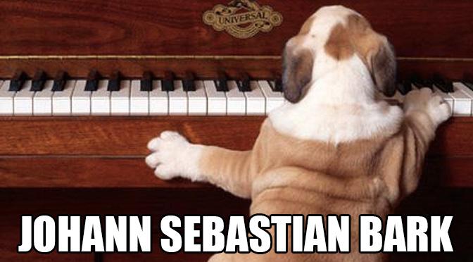 bulldog playing piano dog meme do dogs like music