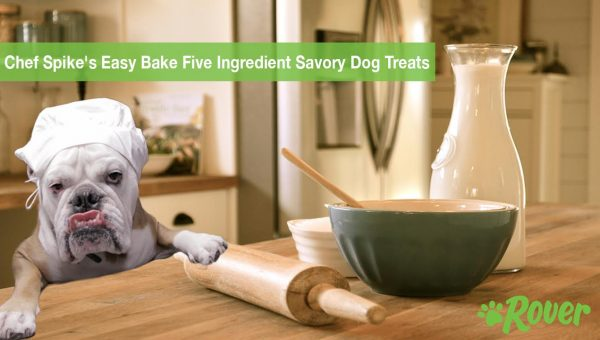 Easy Bake 5-Ingredient Savory Dog Treats by Chef Spike [Video]